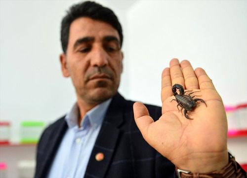 علاقه عجیب و پولساز مرد ترکیه ای به عقرب (+عکس)