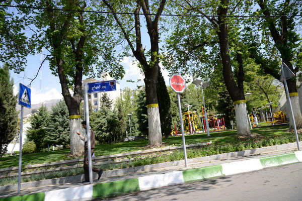 هزینه جابه جایی درختان پایتخت در شورای شهر مشخص شد